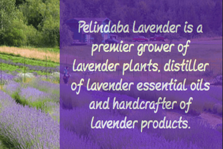 Pelindaba Lavender Farms